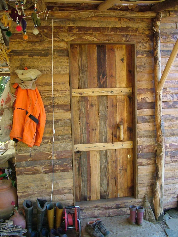Cypress indoor: büyüyen ve bakımlı 31