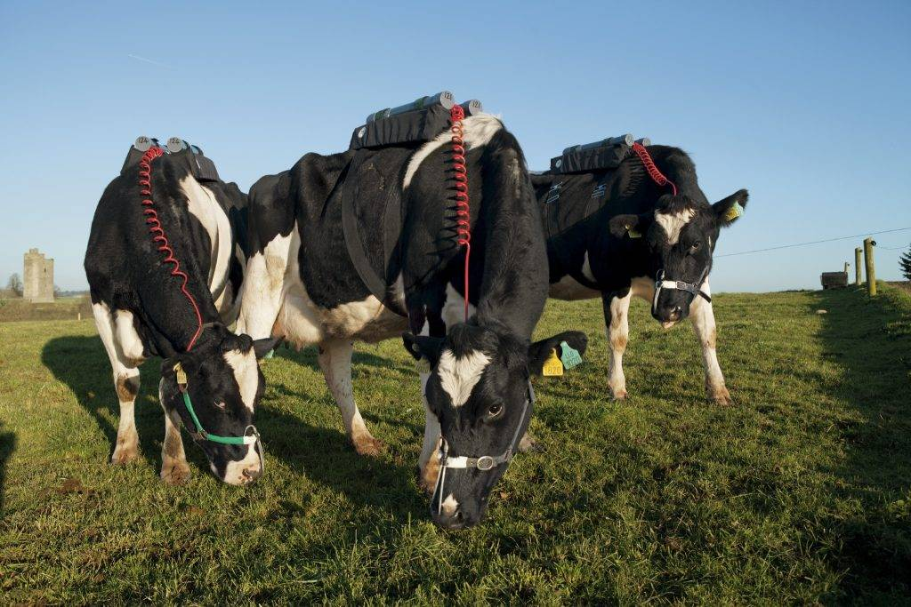 """Animal scientist Matthew Deighton's goal is to reduce greenhouse gas emissions from an Irish Dairy farm by 10%. First he has to measure how much methane comes out of grass fed cows. He has built a vaccum contraption that sits on the cows back to study this. Deighton says, """"Cows are walking fermentation chambers that allow humans to generate high quality food."""" For more info contact: Matthew Deighton Research Scientist – Greenhouse Gas Emissions Animal and Bioscience Research Department Animal & Grassland Research and Innovation Centre Teagasc Moorepark Fermoy Co. Cork Ireland Tel: +353 (0)25 42671 Email: matthew.deighton@teagasc.ie Web: www.teagasc.ie"""